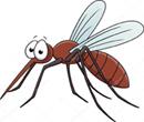 Moustique canadien