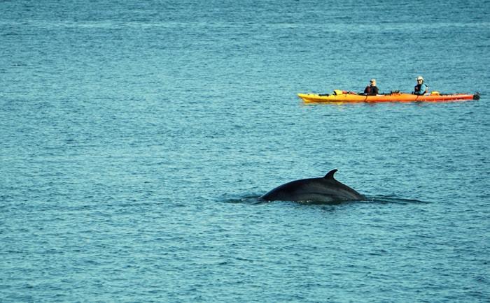 Kayak et baleines au Cap-de-Bon-Désir