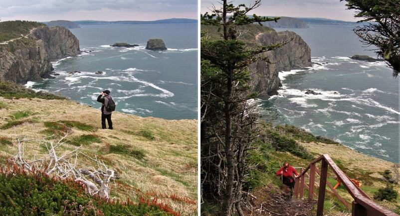 Randonnée Skerwing trail à Terre-Neuve