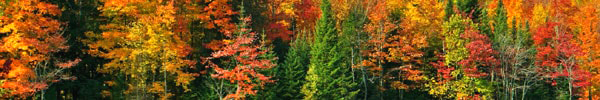 bandeau iti couleurs d'automne