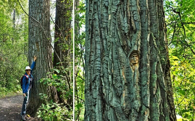 Christine près d'un arbre dans le parc Cottonwood Island