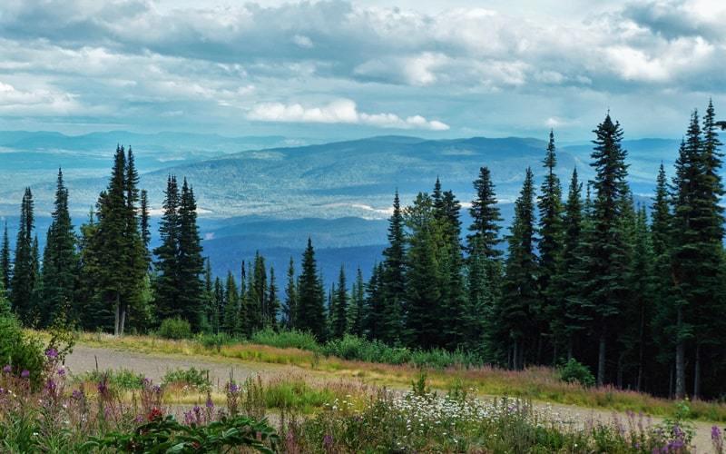 Paysages depuis la route qui mène au sentier du Crater Lake