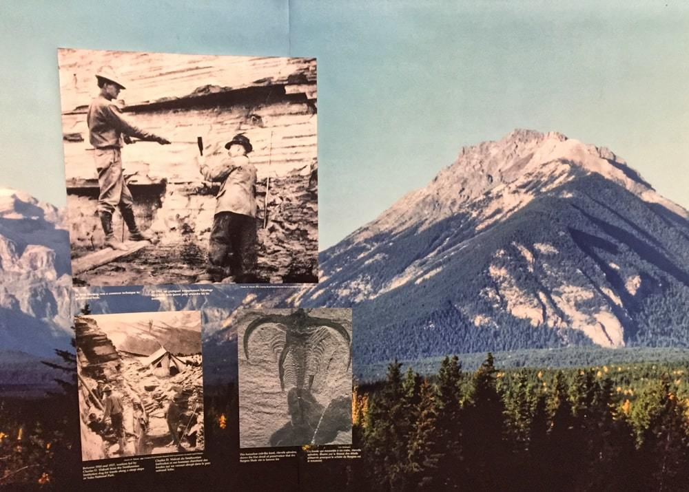Photos de l'exposition sur les fossiles au Visitor Centre de Field