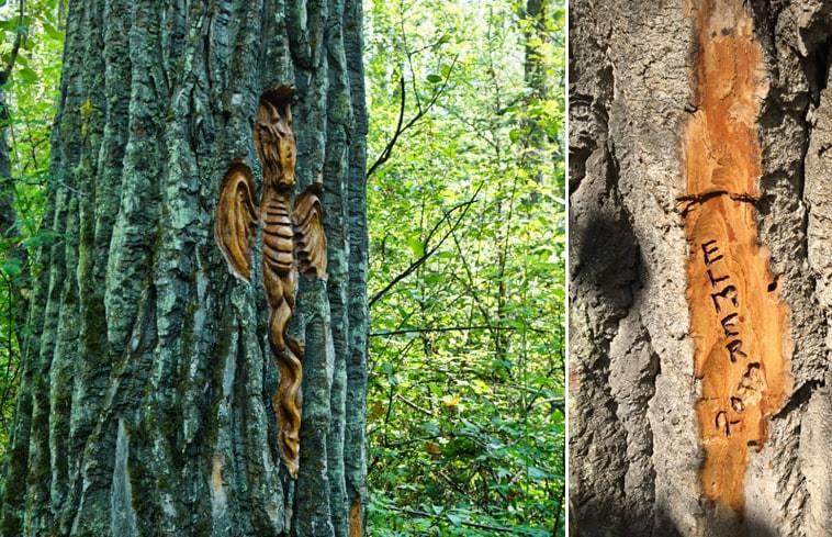Sculpture dans l'écorce d'un arbre au parc Cottonwood Island