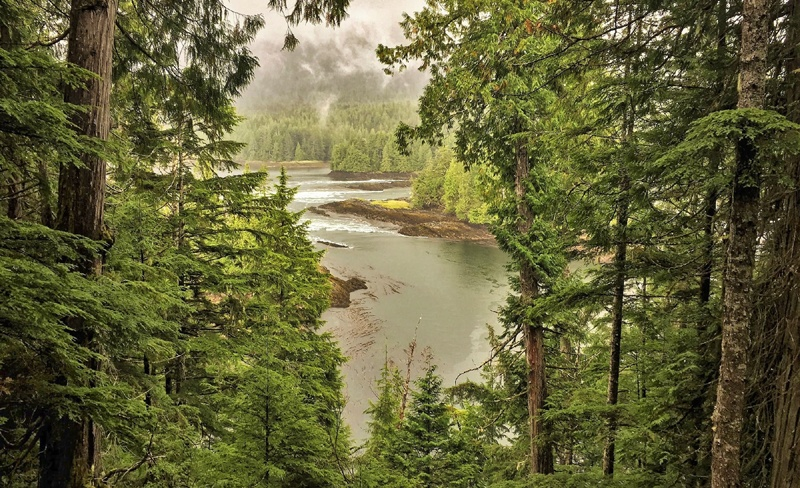 Vue entre les arbres depuis le sentier Butze Rapids à Prince Rupert